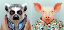 звери свинья