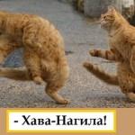 Хава-Нагила-2
