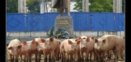 украинские свиньи