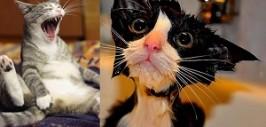 ты кот+
