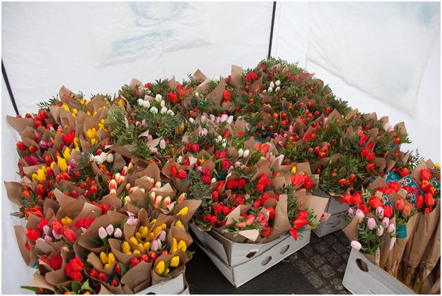 днепропетровск цветы
