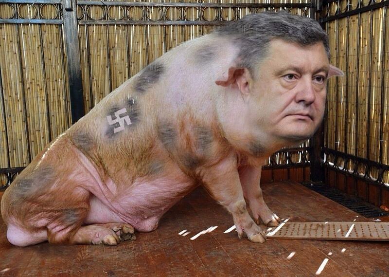 порошенко свинья