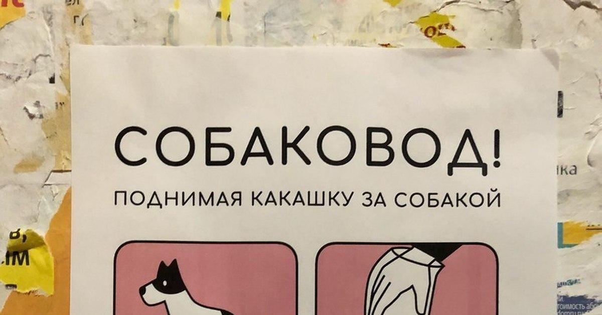 собаковод и какашки