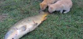рыба тухнет