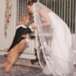 замуж за пса