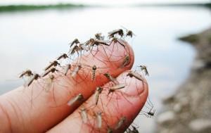 комарье